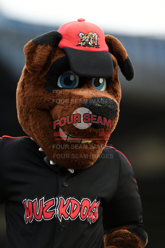 Batavia Muckdogs mascot Homer performs atop the dugout during a game against the Mahoning Valley Scrappers on June 20, 2014 at Dwyer Stadium in Batavia, New York.  Batavia defeated Mahoning Valley 7-4.  (Mike Janes/Four Seam Images)