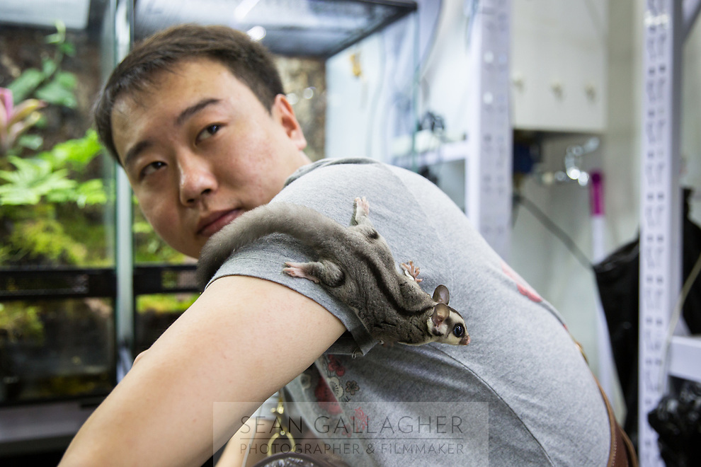 Guan Zhen, 30, with his pet Sugar Glider (Petaurus breviceps) in Beijing's Guanyuan pet market. A species of flying possum, it is typically found in the forests of Australia, Indonesia and New Guinea but has become a very popular pet in China due to its small size and unique appearance.