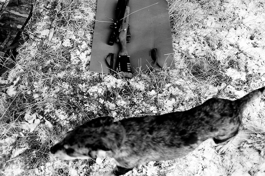 A dog owned by a member of the Idaho Light Foot Militia passes by rifles during a winter training exercise on public lands near Priest Lake, Idaho.