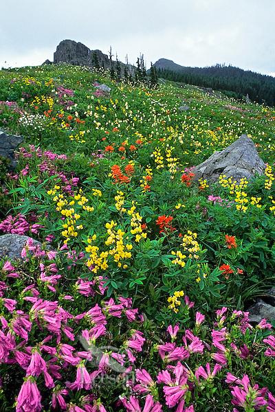 Wildflowers, Gifford Pinchot National Forest, Cascade Mountains, Washington