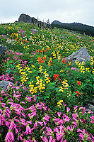 Wildflowers, Gifford Pinchot National Forest, Cascade Mountains, Washington