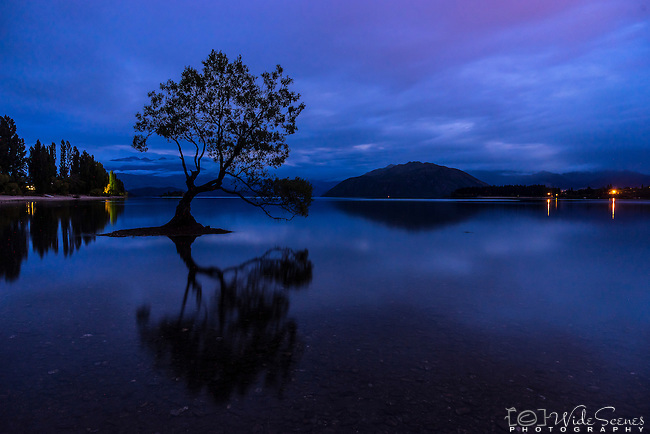 """That Wanaka Tree"" in the town of Wanaka in New Zealand."