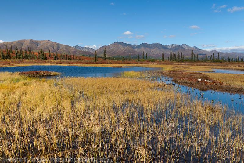 Autumn colors on the wetland tundra, Alaska Range mountains, Interior, Alaska.