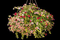 hanging basket of mixed annual flowers silhouette on black background