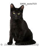 Xavier, ANIMALS, cats, photos, SPCHCATS719,#A# Katzen, gatos
