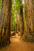 Lori stands among the giant redwoods in the Stout Grove at Jedediah Smith State Park, part of Redwood National and State Parks in California.