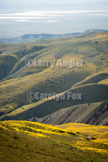Soda Lake in the Carrizo Plain below the colorful golden wildflowers covering the west slope of the Temblor Range, Carrizo Plain National Monument, San Luis Obispo County, Calif.