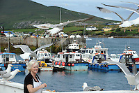 28-7-2014: Eileen Whelan of Skellig Mist Restaurant pictured feeding her 'friends' the seagulls in Portmagee on Monday on Monday as the crew for Star Wars leaves the harbour for Skellig Micheal  for filming.<br /> Picture by Don MacMonagle