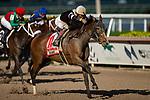 HALLANDALE BEACH, FL - JANUARY 25: Pink Sands, #11, ridden by jockey Jose Ortiz, wins the Inside Information Stakes on January 25, 2020 at Gulfstream Park in Hallandale Beach, Florida. Kaz Ishida/Eclipse Sportswire/CSM