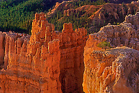 730750020 sunrise light turns the sandstone hoodoos a glowing reddish yellow in bryce canyon national park in south central utah