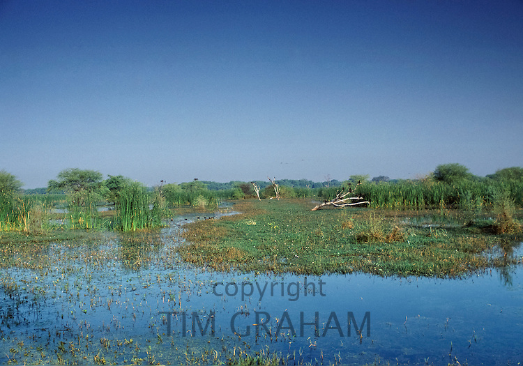 Water birds at Bharatpur Bird Sanctuary, Keoladeo Ghana National Park, in Brij region of Rajastan, India