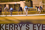 KINGDOM DERBY CHAMP: Killorane Boy no.1 winner of the Greyhound and Pet World Kingdom Derby Final in a time of 28:49 2nd was Oran Legend no.6 and 3rd was Lassa Extreme.