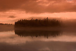 Alaska, fog and forest, Cruising the Southeast wilderness waterways on the Spirit of Discovery..Morning fog view in Bay of Pillars and then excursions to shore in durable inflatable boats to see bullwhip kelp, seashore life, seaweed, barnacles, forests of Tongass National Forest, and abandoned salmon cannery with its rusting equipment. .Photo copyright Lee Foster, 510/549-2202, lee@fostertravel.com, www.fostertravel.com.