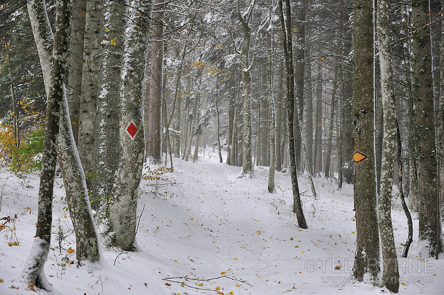 Hiking and biking signs indicate a trail in the winter forest