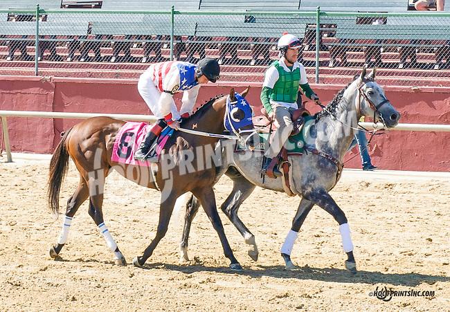 Distorted Emotion before The Longines Gentlemans International Fegentri race at Delaware Park on 9/14/15 - Mr. Gonzalo Carmena aboard