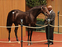 Hip #48 Medaglia d'oro - Welcome Surprise, consigned by Lane's End sold for $250,000 at the Keeneland September Yearling Sale.  September 10, 2012.