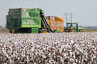 Cotton being harvested by a cotton picker.  Cotton is a primary crop in the Arkansas Delta.  Arkansas is racked 5th in the nation in cotton production.