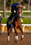 OCT 29: Breeders' Cup Classic entrant Vino Rosso, trained by Todd A. Pletcher, at Santa Anita Park in Arcadia, California on Oct 29, 2019. Evers/Eclipse Sportswire/Breeders' Cup