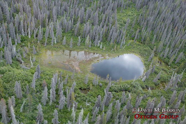 Yukon Scenic Aerial With Pond