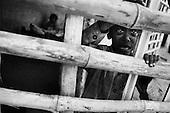 Ramgarh 27.02.2010 India. Leprosy colony. This is the place where works sister Stefania from Poland..Photo Maciej Jeziorek/Napo Images..Ramgarh 27.02.2010 Indie .Kolonia dla tredowatych, w ktorej pracuje pochodzaca z Polski siostra Stefania.fot. Maciej Jeziorek/Napo Images