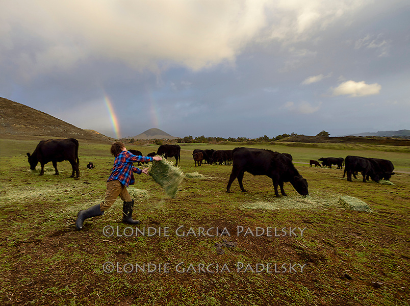 Cash feeds the cows on a stormy day at the ranch