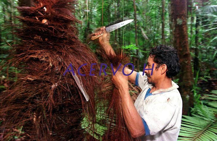 Índio Werekena morador da comunidade de Anamoim no alto rio Xié, corta as  fibras de piaçaba(Leopoldínia píassaba Wall). A fibra , um dos principais produtos geradores de renda na região é coletada de forma rudimentar. Até hoje é utilizada na fabricação de cordas para embarcações, chapéus, artesanato e principalmente vassouras, que são vendidas em várias regiões do país.<br />Alto rio Xié, fronteira do Brasil com a Venezuela a cerca de 1.000Km oeste de Manaus.<br />06/06/2002.<br />Foto: Paulo Santos/Interfoto Expedição Werekena do Xié<br /> <br /> Os índios Baré e Werekena (ou Warekena) vivem principalmente ao longo do Rio Xié e alto curso do Rio Negro, para onde grande parte deles migrou compulsoriamente em razão do contato com os não-índios, cuja história foi marcada pela violência e a exploração do trabalho extrativista. Oriundos da família lingüística aruak, hoje falam uma língua franca, o nheengatu, difundida pelos carmelitas no período colonial. Integram a área cultural conhecida como Noroeste Amazônico. (ISA)