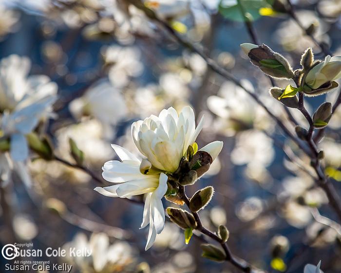 Spring at 156 Porter St  in East Boston, Boston, Massachusetts, USA
