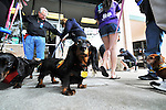 Kiwanis Pet Parade 2010