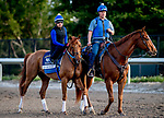 HALLANDALE BEACH, FL - JANUARY 25: Gun Runner scools at the starting gate during morning workouts as horses prepare for the Pegasus World Cup Invitational at Gulfstream Park Race Track on January 25, 2018 in Hallandale Beach, Florida. (Photo by Scott Serio/Eclipse Sportswire/Breeders Cup)
