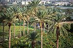 Palestinian territories, Jordan Valley, a view of Jericho