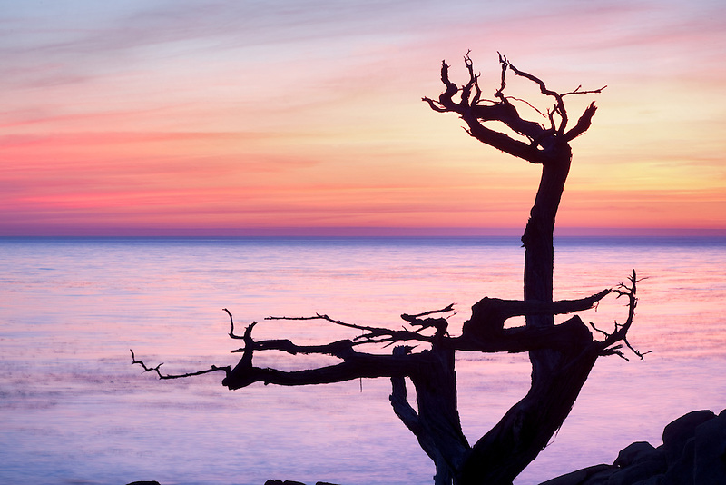 Sihoueted cypress tree and sunset. 17 Mile Drive. Pebble Beach, California