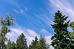 6.10.17 - Backyard Skyline...