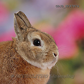 Kim, ANIMALS, REALISTISCHE TIERE, ANIMALES REALISTICOS, photos,+Netherland Dwarf-cross rabbit, Peter.,++++,GBJBWP37874,#A# ,funny