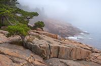 Acadia National Park, Maine:<br /> Fog blankets the granite shoreline near the Otter Cliffs