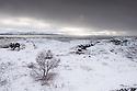 Iceland. 02.02.2017. Lake Thingvallavatn, Thingvellir National Park, Iceland. Photograph © Jane Hobson.