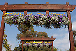 ANNUAL FLOWERS HANG FROM ARCHES AT PANAMERICAN SEED PACK TRIAL