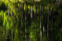 ROCK POND, Pharoah Lake Wilderness Area, Adirondack Forest Preserve, New York