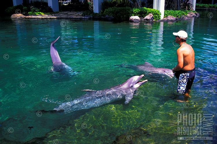 Atlantic bottlenose dolphins with trainer at Kahala Mandarin hotel on Oahu