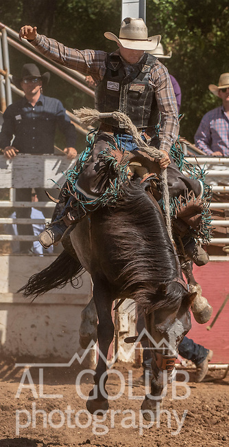 Saddle Bronc rider Ethan Lemmons from Castro Valley, California scores 76.5 at the 62nd annual Mother Lode Round-up on Sunday, May 12, 2019 in Sonora, California.  Photo by Al Golub