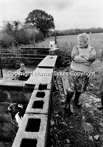 Puppy Farming Wales 1989. A Boxer and two other breeds in back ground.
