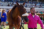 DEL MAR, CA  SEPTEMBER 1: #5 Bellafina, and her groom head back to the barn after she wins the Del Mar Debutante (Grade 1) on September 1, 2018, at Del Mar Thoroughbred Club in Del Mar, CA.(Photo by Casey Phillips/Eclipse Sportswire/Getty ImagesGetty Images