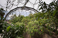 The Mediterranean Biome at the Eden Project, St. Austell, Cornwall.