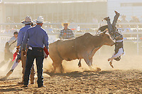 Rodeo is an integral part of rural Australian lifestyle and competitors travel great distances to compete on the circuit. The Australian Rodeo consists of many events some of which are junior and ladies' (open) barrel race, saddle bronc riding, bull riding, bareback bronc riding, rope and tie, steer wrestling, team roping and the steer ride. Males, females and kids are all involved in the Australian rodeo circuit.<br /> Pictures James Horan