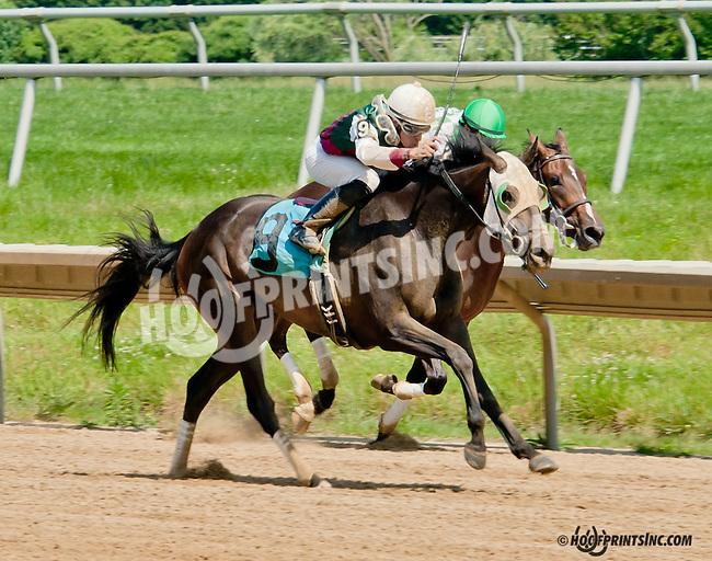 Dark Woman winning at Delaware Park on 6/20/13