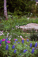 Wildflower meadow garden with Lupine, Phlox, and Oenothera