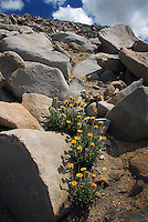 Wildflowers behind Keeler Needle