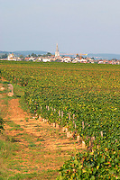 Vineyard. View to Meursault Perrieres and Meursault village. Puligny Montrachet, Cote de Beaune, c d'Or, Burgundy, France