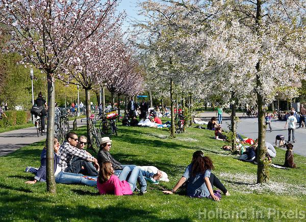 Relaxen in het park onder bloesembomen