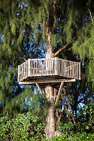 A tree house on the North Shore of O'ahu.