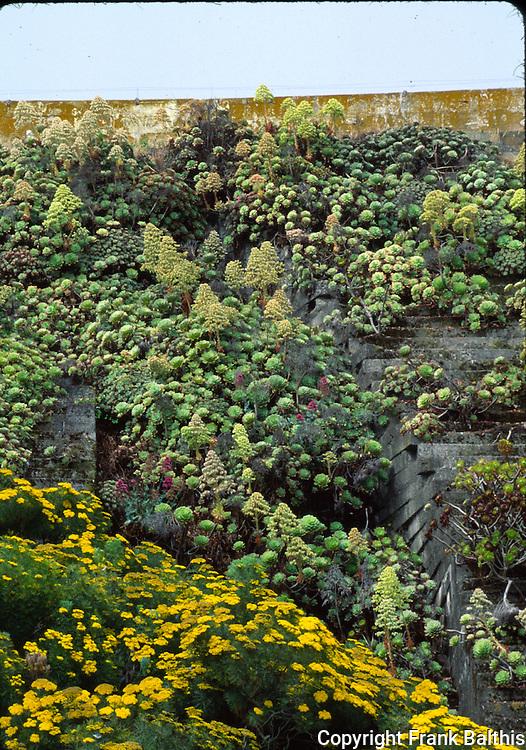 Succulents on wall at Alcatraz Island